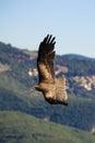 Vuelo águila