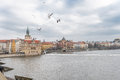 Flying Feeding Seagull over the Vltava in Prague, Czech. With Old Town Water Tower Royalty Free Stock Photo