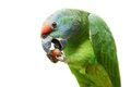 Flying festival amazon parrot on white the background Stock Photo