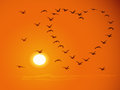 Flying flock birds against sunset for valentines d Royalty Free Stock Photo