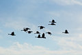 Flying Geese Silhouettes in Blue Sky Stock Photography
