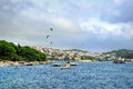 Flying gulfs over harbour in hvar on island croatia Royalty Free Stock Images