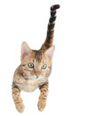 Flying or jumping kitten cat Royalty Free Stock Photo