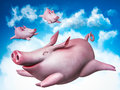 Flying piggies sky divers funny Royalty Free Stock Image