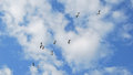 Flying seagull on blue sky with clouds Royalty Free Stock Images