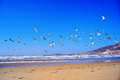 Flying seagull many seagulls in the seaside Royalty Free Stock Photography