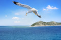 Flying seagull over beautiful sea Stock Photography