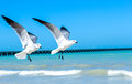 Flying seagulls imagge for over a yucatan peninsula beach Royalty Free Stock Photos