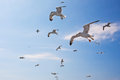 Flying seagulls over blue sky Royalty Free Stock Images
