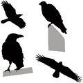 Flying and sitting crow set of silhouettes Stock Photo
