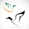 Flying wild duck vector image of an Stock Photography
