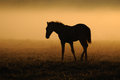 Foal against the dawn mares with foals a herd of horses at horses come in a landscape at sunrise Stock Images