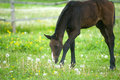 Foal in field Stock Images