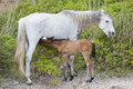 Foal and filly Stock Photo