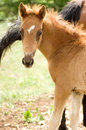Foal horse on green meadow Royalty Free Stock Photos