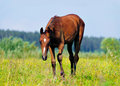 Foal sneak in the pasture Stock Photos