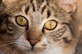 Focus on domestic cat eyes Stock Photos