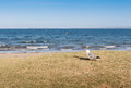 Focus on lone seagull bird standing nearby beach with blurred ba the background ocean Royalty Free Stock Photography