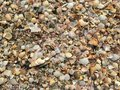 Focus on the remains of marine life, sand and sea, blue sea and Royalty Free Stock Photo