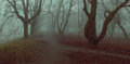 Fog background mistycal park alley autumn trees fall foliage Royalty Free Stock Photo