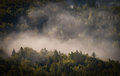 Fog cover the forest. Royalty Free Stock Photo
