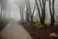 Fog in the forest in sintra mountain in portugal Royalty Free Stock Images