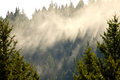 Fog lifting through evergreen forest creating shafts of light near prince george british columbia canada Stock Image