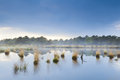Fog over swamp in drenthe blue after rain Royalty Free Stock Image