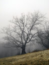 Fog in the spring forest crimean mountains Royalty Free Stock Photo