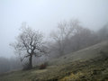 Fog in the spring forest crimean mountains Stock Photos