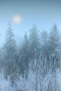 Fog in winter forest Royalty Free Stock Photo