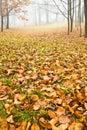 Foggy autumn Stock Photo