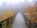 Foggy Autumn Stock Photo