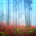Foggy autumn forest day into the during Royalty Free Stock Photo
