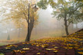 Foggy autumn in the park scenery Royalty Free Stock Photography