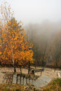 Foggy autumn park with yellowed tree and steps top view of the climbing in Stock Photography