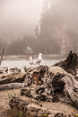 Foggy beach driftwood covered with island in the background in la push washington with a pair of birds Royalty Free Stock Image