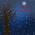 Foggy Christmas Winter Tree Scene with Snowflakes Stock Image