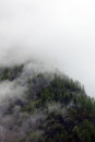 Foggy clouds rising from alpine mountain forest Royalty Free Stock Photo