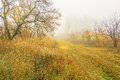 Foggy day in autumn forest walk the on a Stock Photography