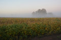 Foggy field sunrise early morning soybean Royalty Free Stock Image
