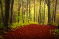 Foggy forest during autumn fairytale for child and fantasy books Royalty Free Stock Photography