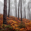 Foggy forest beautiful view of a on a day Stock Photography
