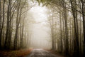 Foggy forest road plitvice national park Royalty Free Stock Images