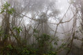 Foggy jungle in the chiang dao mounts thailand Stock Photos