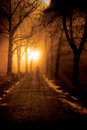 Foggy lonely night path in a park at Royalty Free Stock Photo