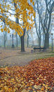 Foggy morning in autumn park Stock Photos