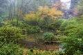 Foggy Morning at Japanese Garden in Fall Season Royalty Free Stock Photo