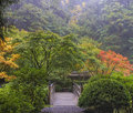 Foggy morning in japanese garden with wooden foot bridge during fall season Royalty Free Stock Photos