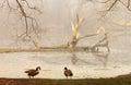 Foggy morning at the lake Royalty Free Stock Photo